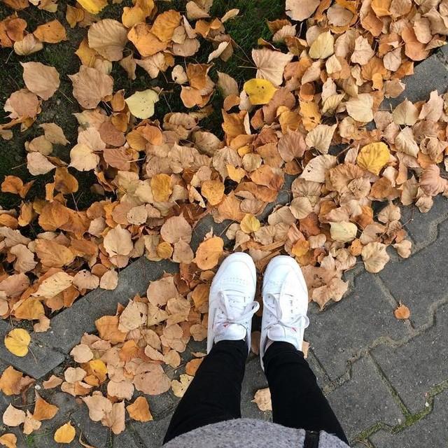 Kiedy jesień była słoneczna, a ja nie byłam kaloryferem 😿 _______ #autumn #jesień #październik #october #leaf #gold #reebokclassic #fall #yellow #tagsforlikes #tags4like  #monday #liście #spadająceliście #złotajesień