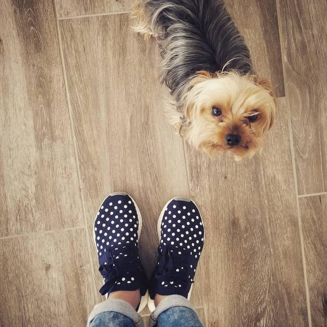 When you're trying to show off your new shoes (they're too cool, I can't help it) but your dog is judging you 😅😍🐶 #Gucci #doglover #photobomb #myshoestho #nmd #sundayfunday #behappy